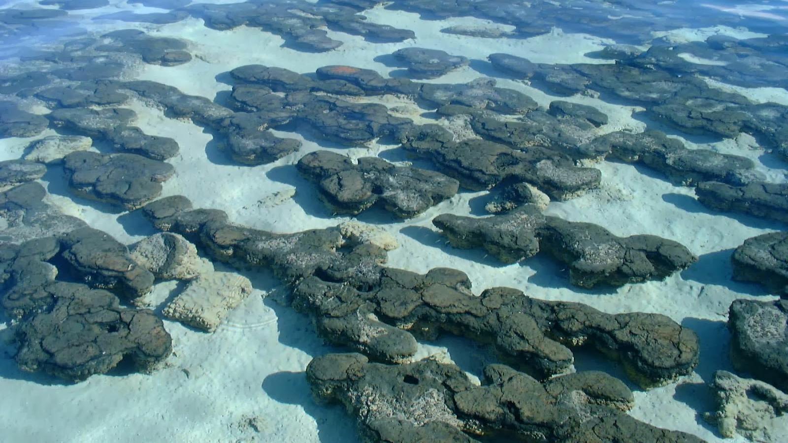 Смесь солей магния и натрия на ранней Земле помогла зарождению жизни