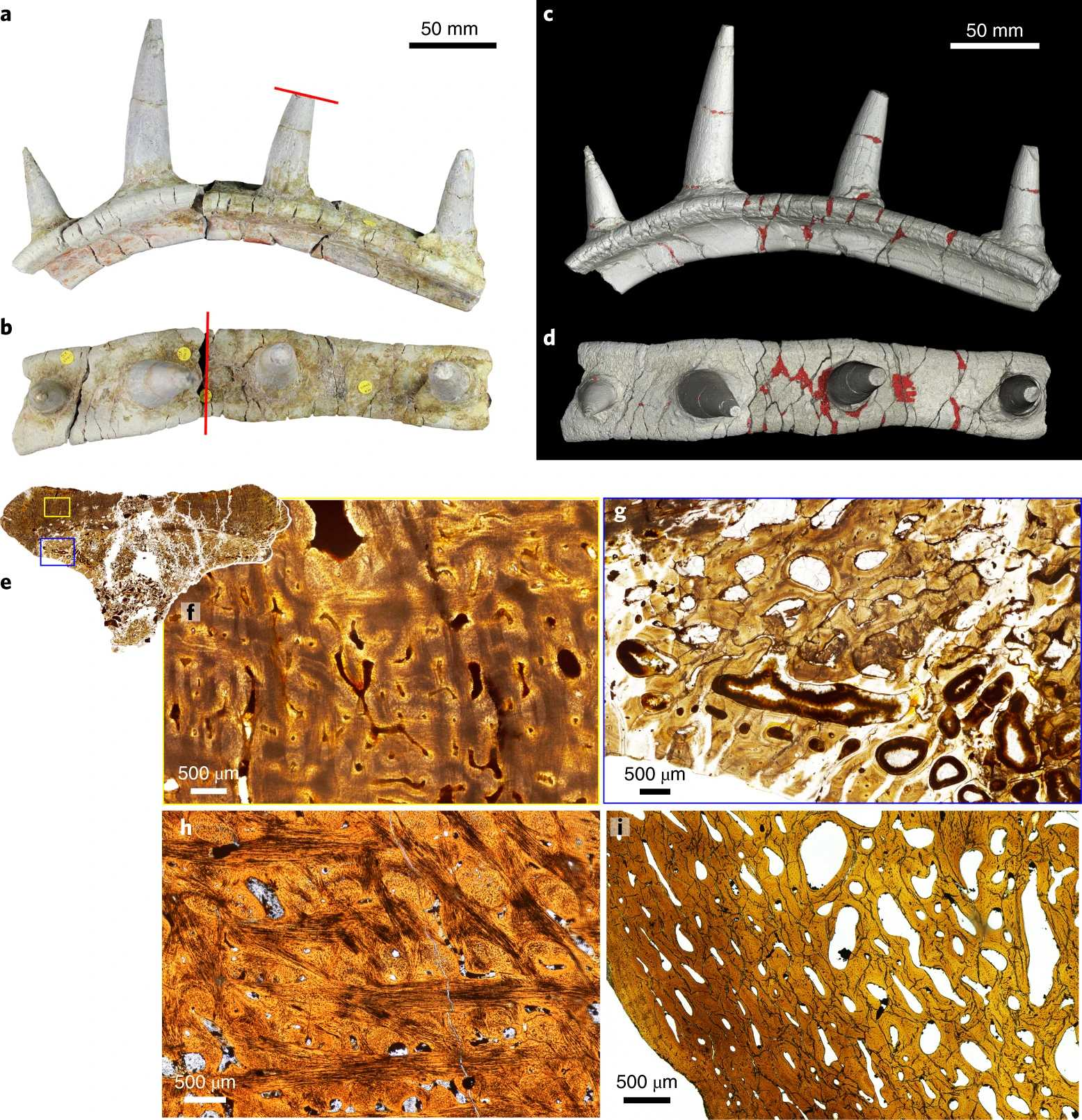 Ребра первого африканского анкилозавра усеивали шипы