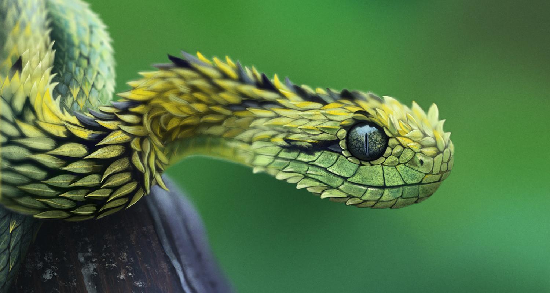 Вымирание динозавров помогло процветанию змей