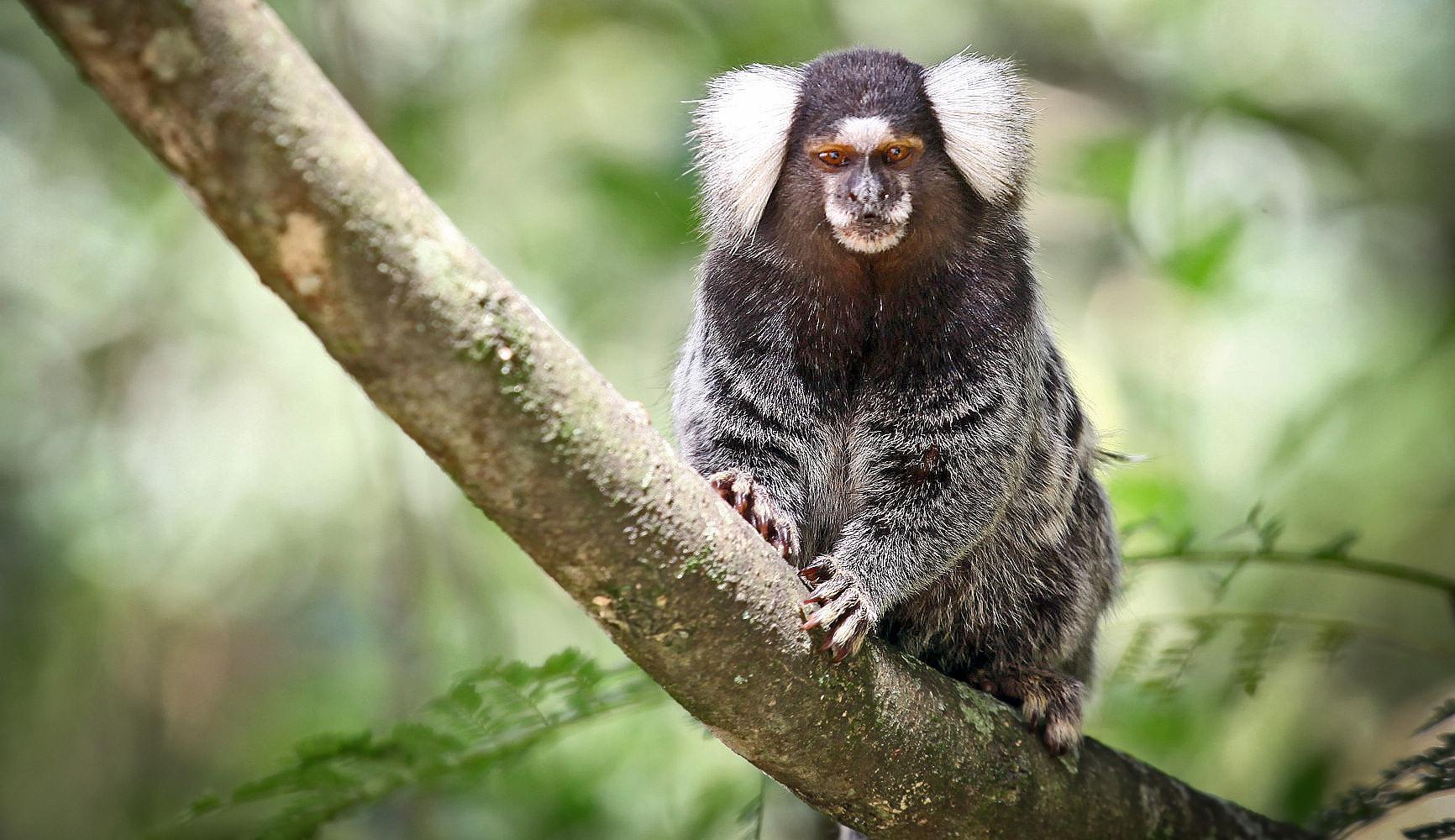 Вкус к глутамату помог приматам изменить диету