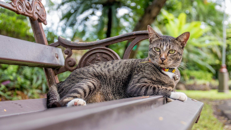 Общительный или агрессивный? Учёные выделили семь типов характера у котов
