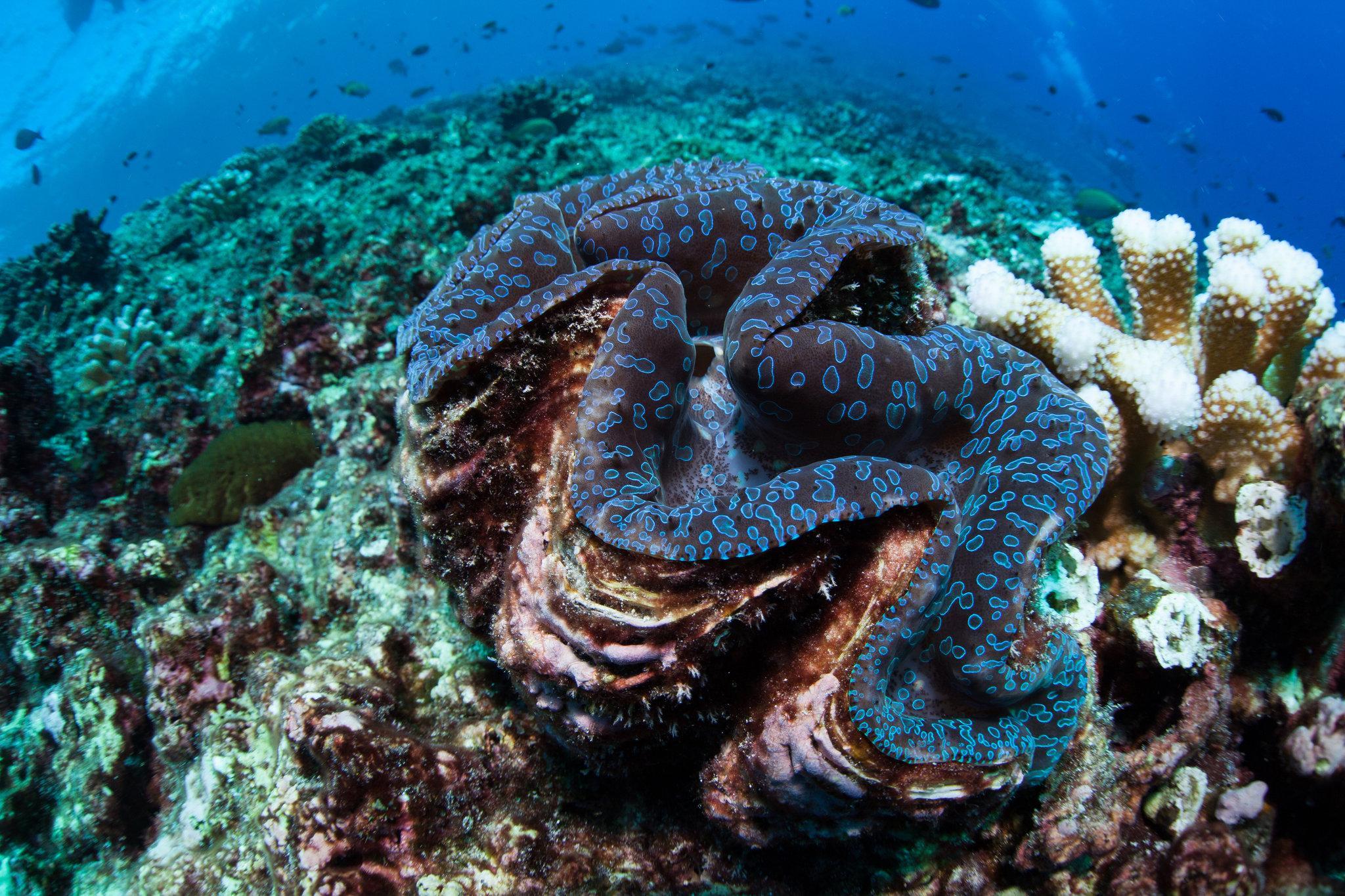 Кораллы адаптировались к глобальному потеплению