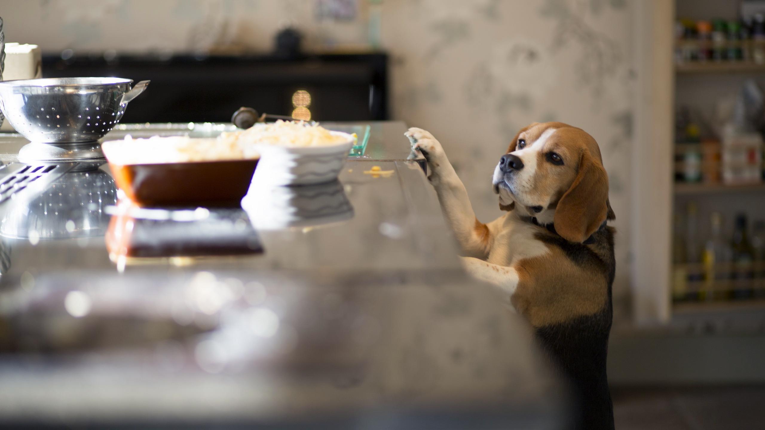 Собаки понимают разницу между случайным и неслучайным