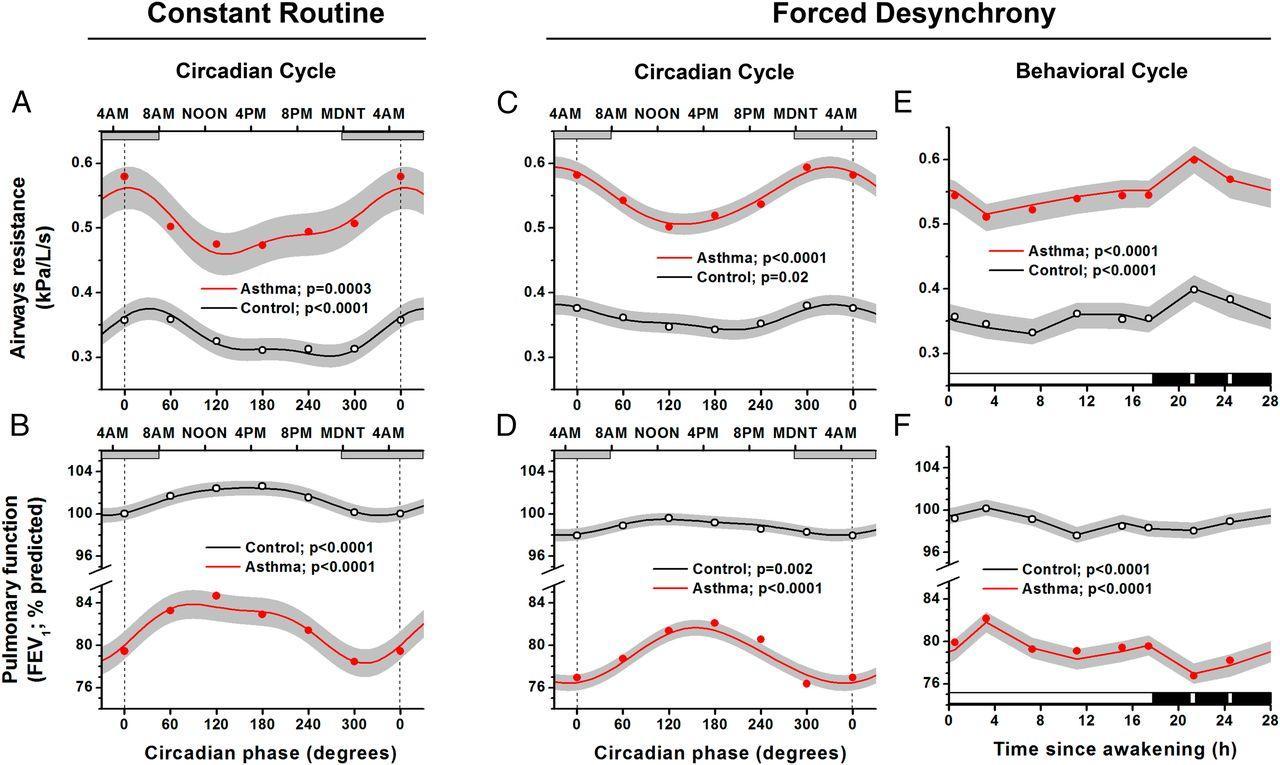 Ночные обострения астмы связали с циркадными ритмами