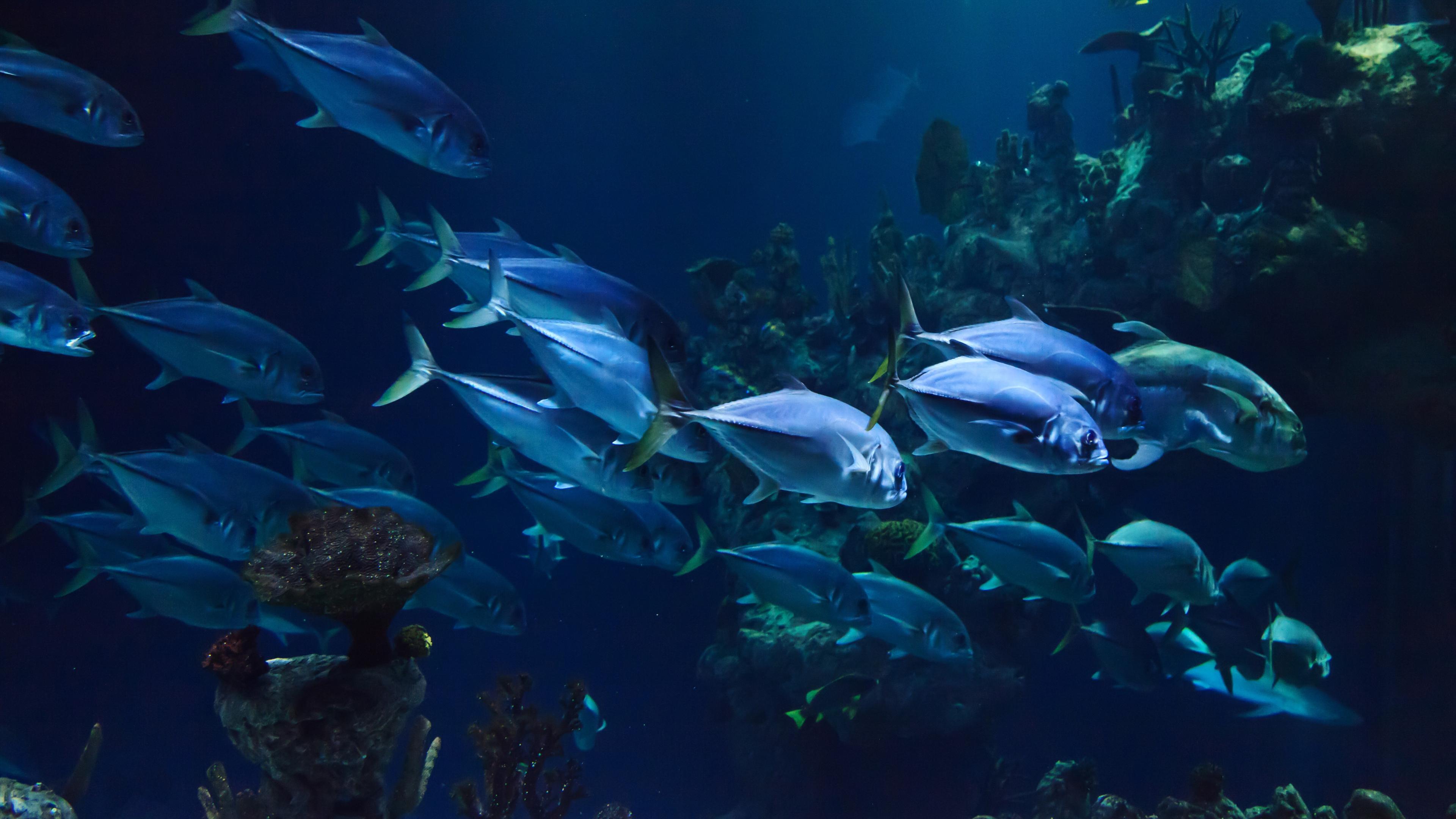 Нехватка кислорода заставляет рыб мигрировать вверх. Вероятно, причина в потеплении