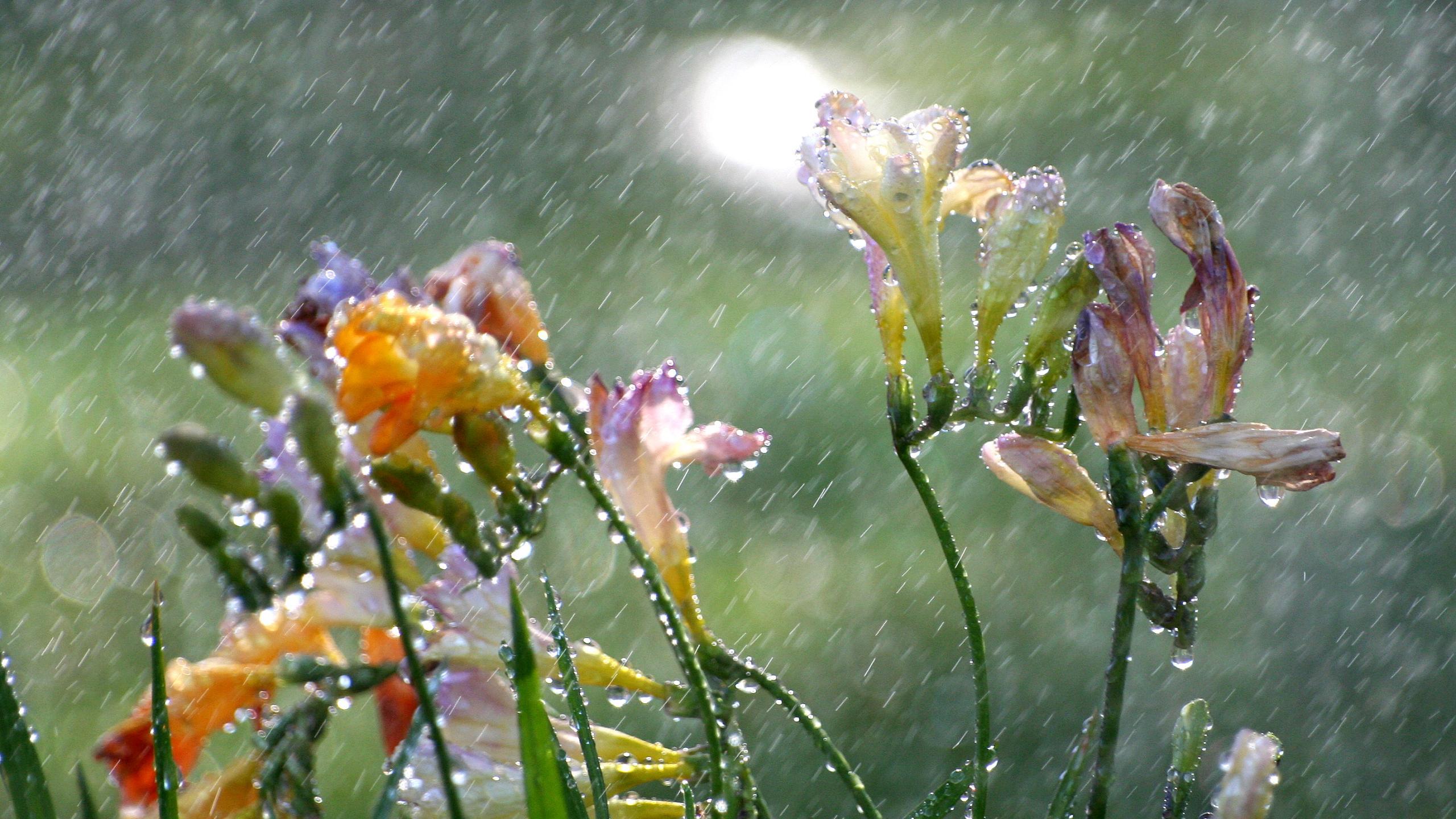 Дождь помогает микробам колонизировать растения
