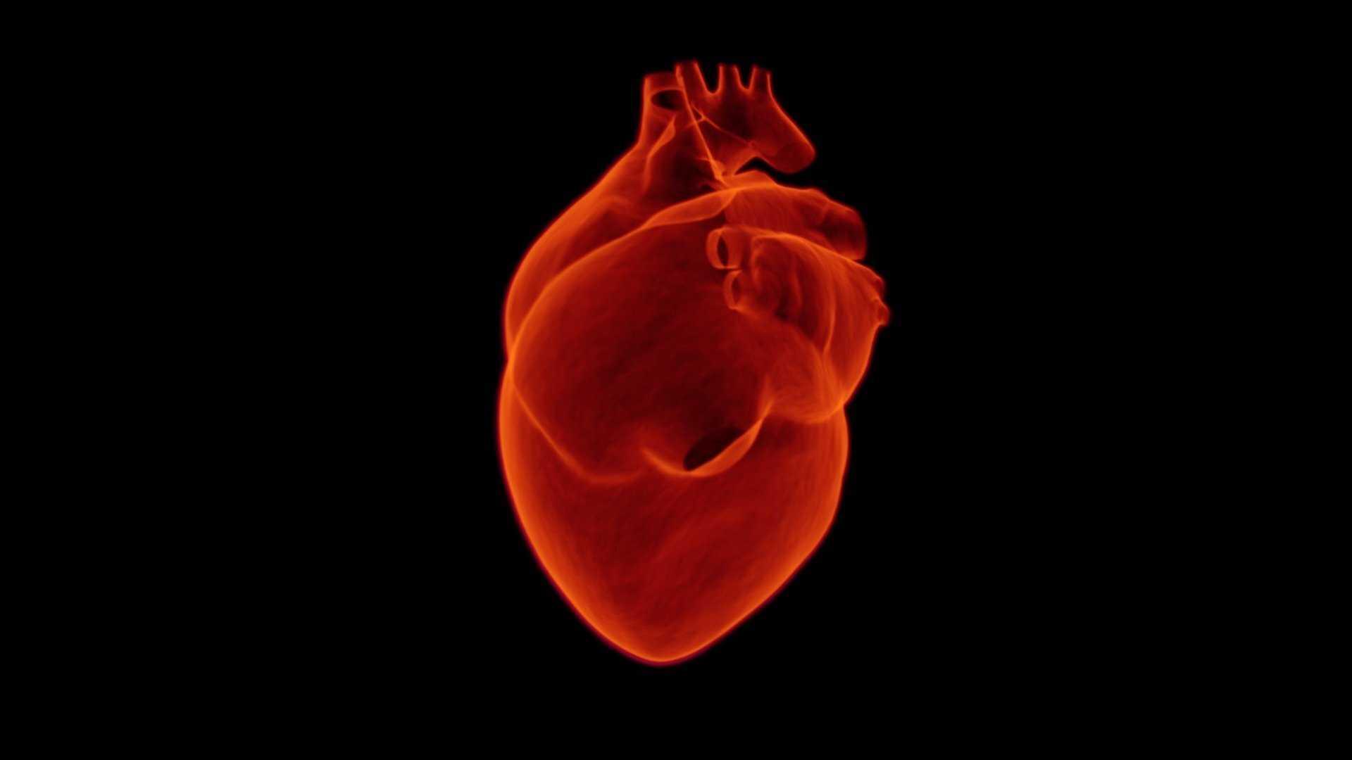 Репрограммирование клеток частично восстановило сердце мышей после инфаркта
