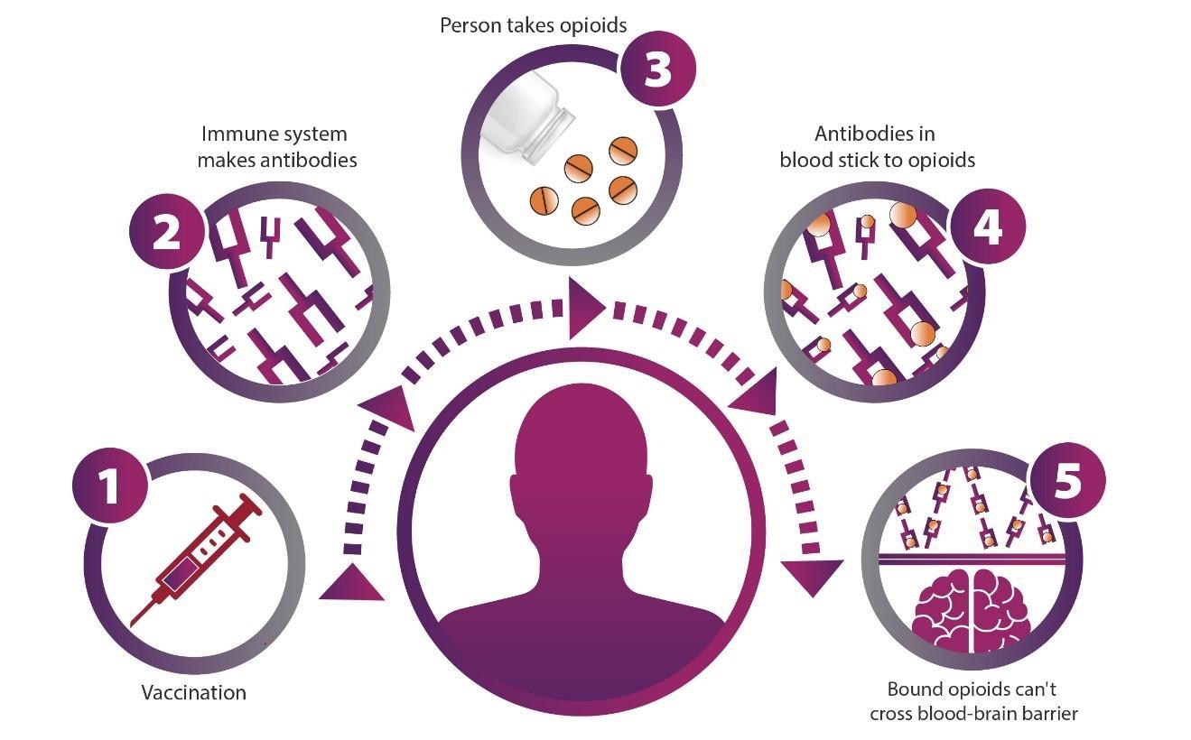 Проводятся испытания первой в мире вакцины против опиоидного препарата