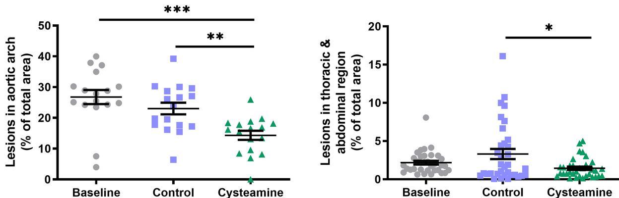 Цистеамин уменьшил на треть размер атеросклеротических бляшек в аорте мышей