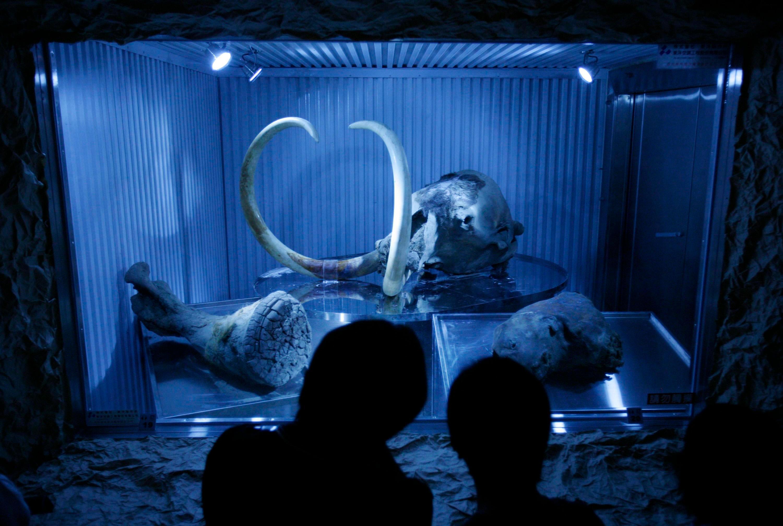 Возрождение мамонтов не нужно: России лучше снова стать родиной слонов
