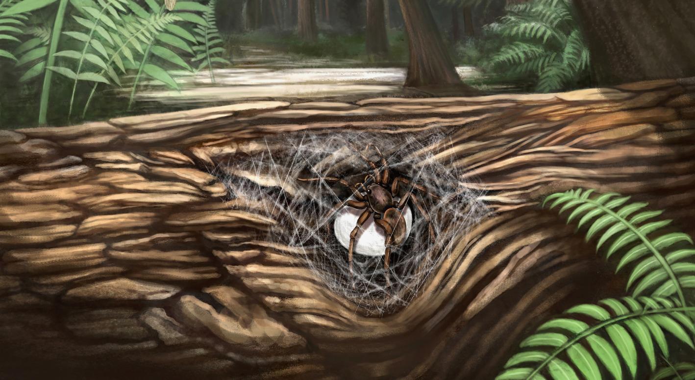 Древняя паучиха застыла в янтаре, защищая своих детенышей