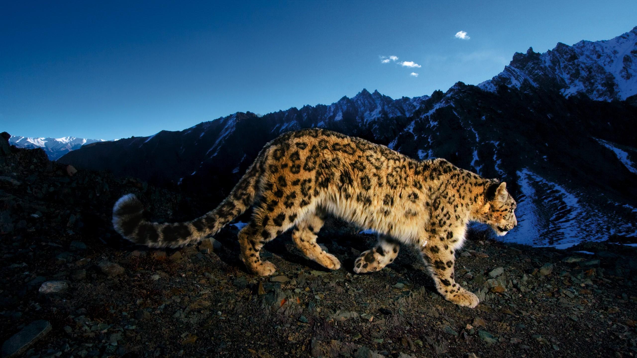 Изменение высоты поверхности Земли связали с ускоренной эволюцией видов