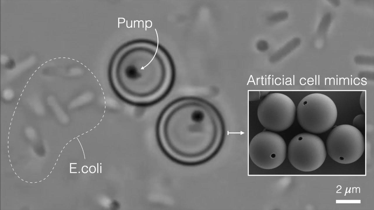 Искусственные клетки научили есть