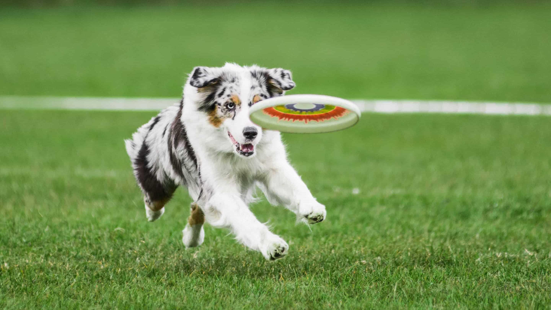 У домашних собак выявили состояние, похожее на человеческое поведенческое расстройство