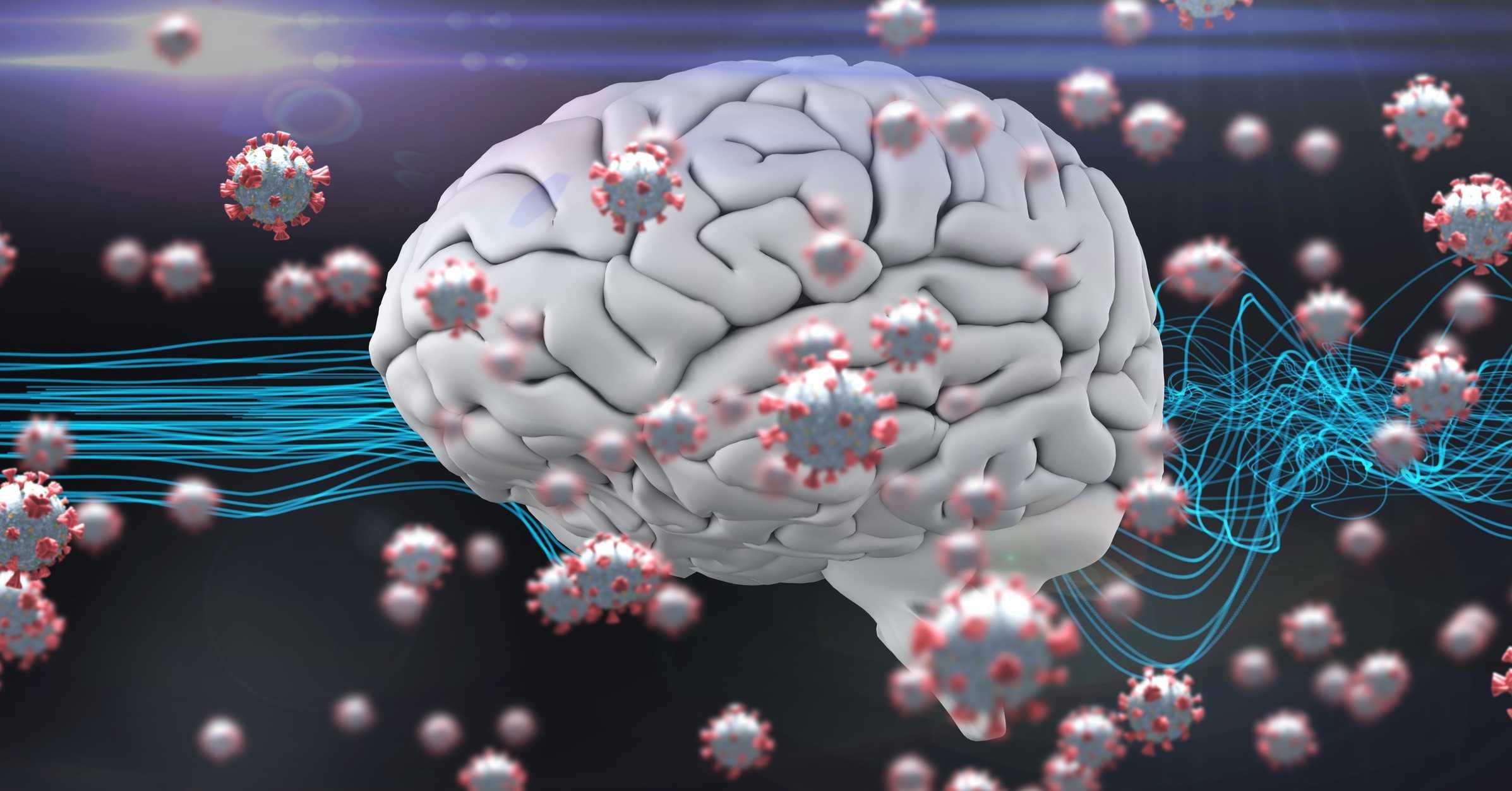 SARS-CoV-2 может напрямую поражать клетки кровеносных сосудов мозга