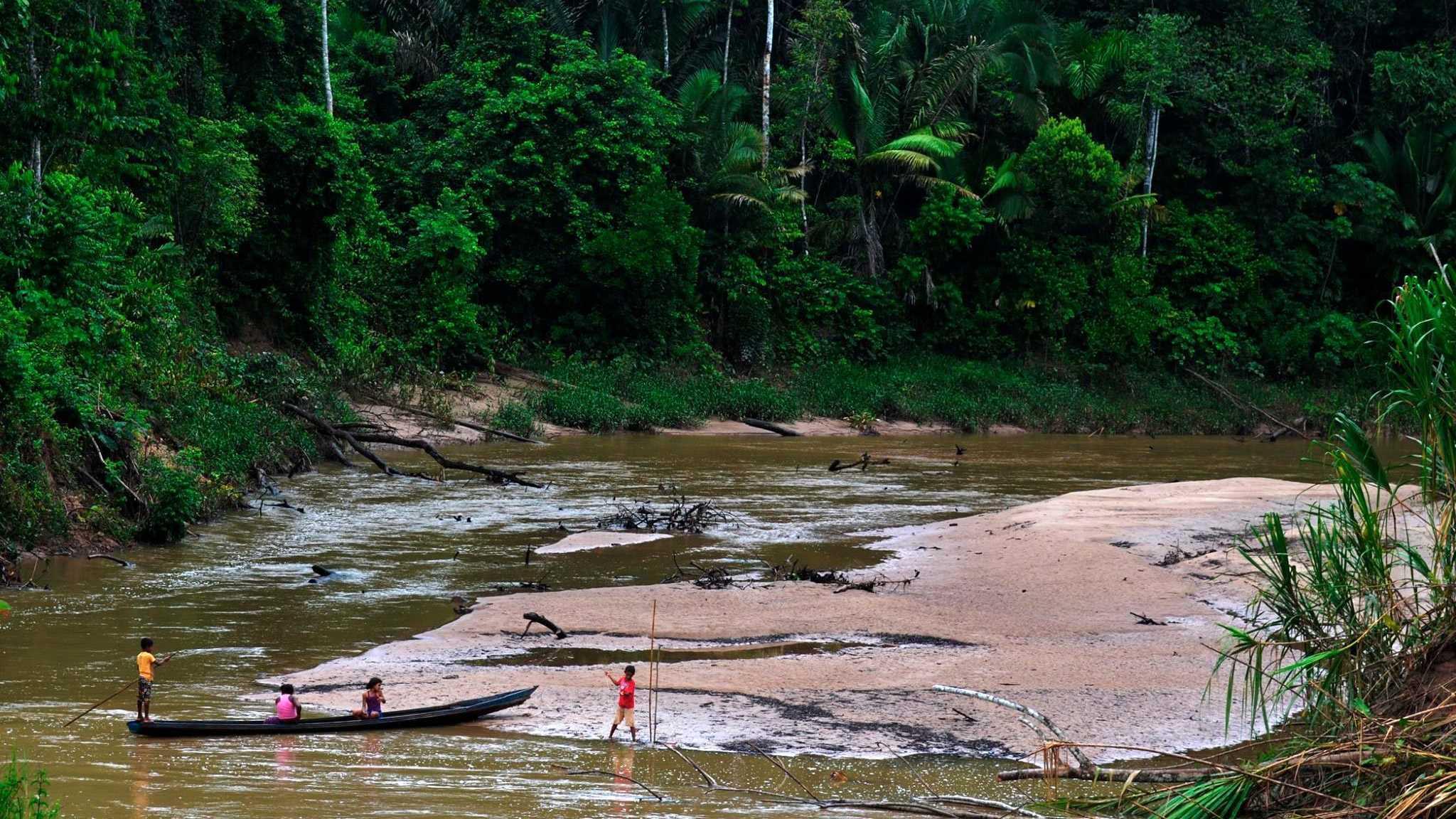 Охоту в тропических лесах назвали экологичной альтернативой скотоводству