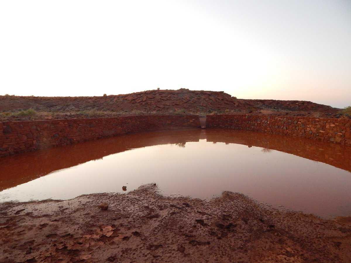 После дождей в Аризоне на свет появились сотни трехглазых «креветок-динозавров»