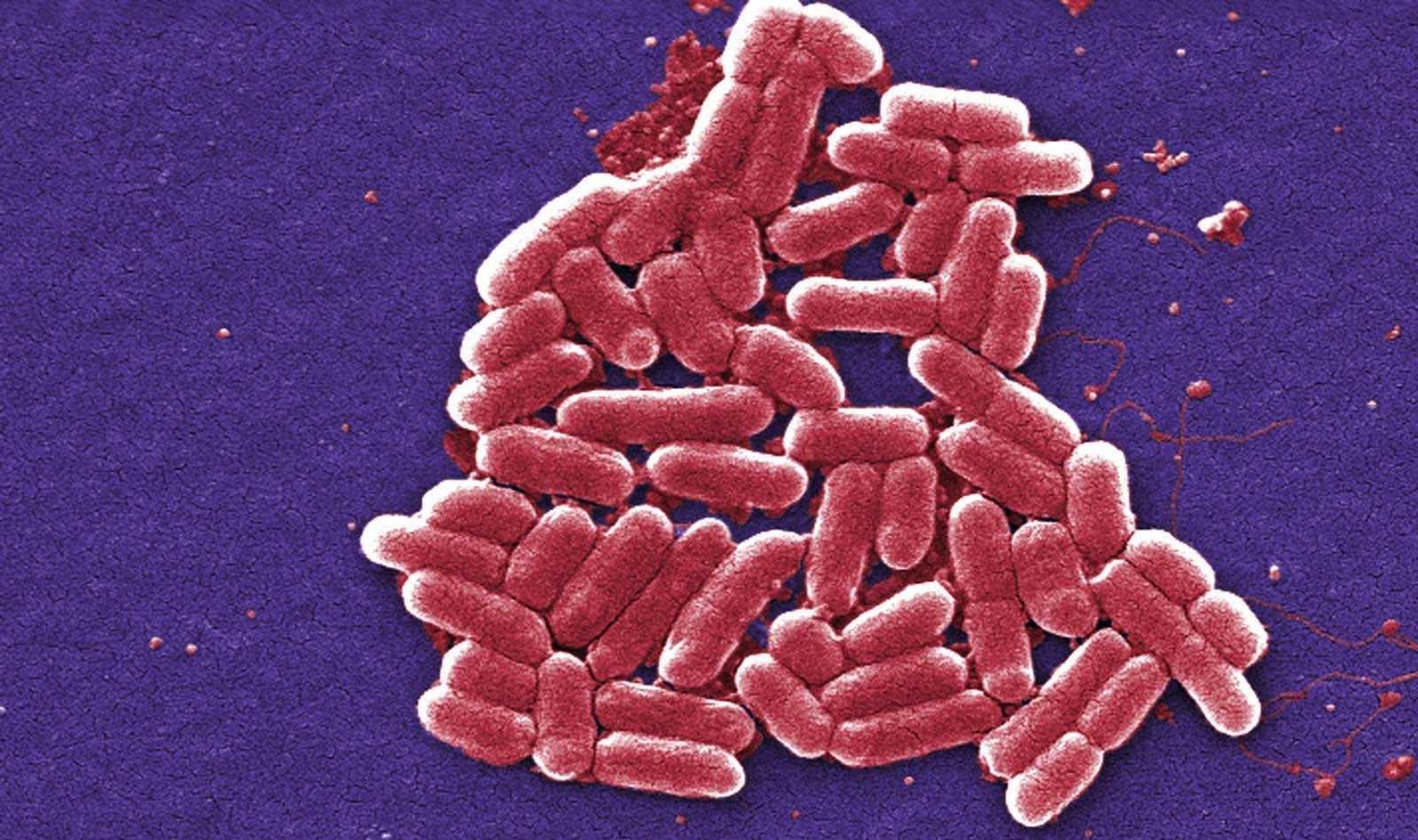 Модифицированные микробы подкармливают противораковые Т-клетки