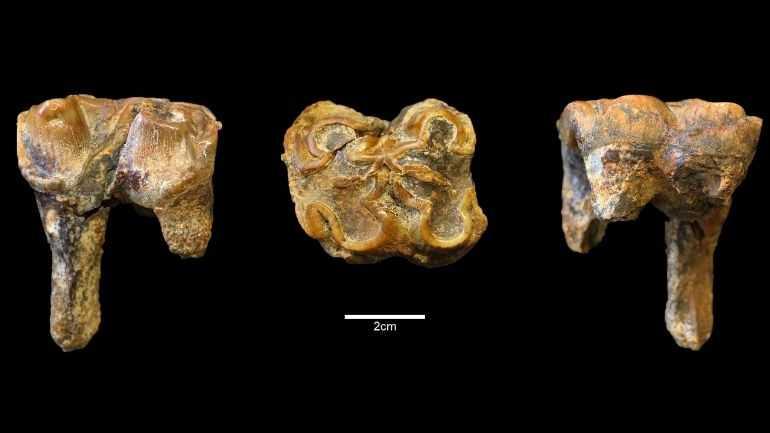 Миллион лет назад в Англии жили огромные бегемоты