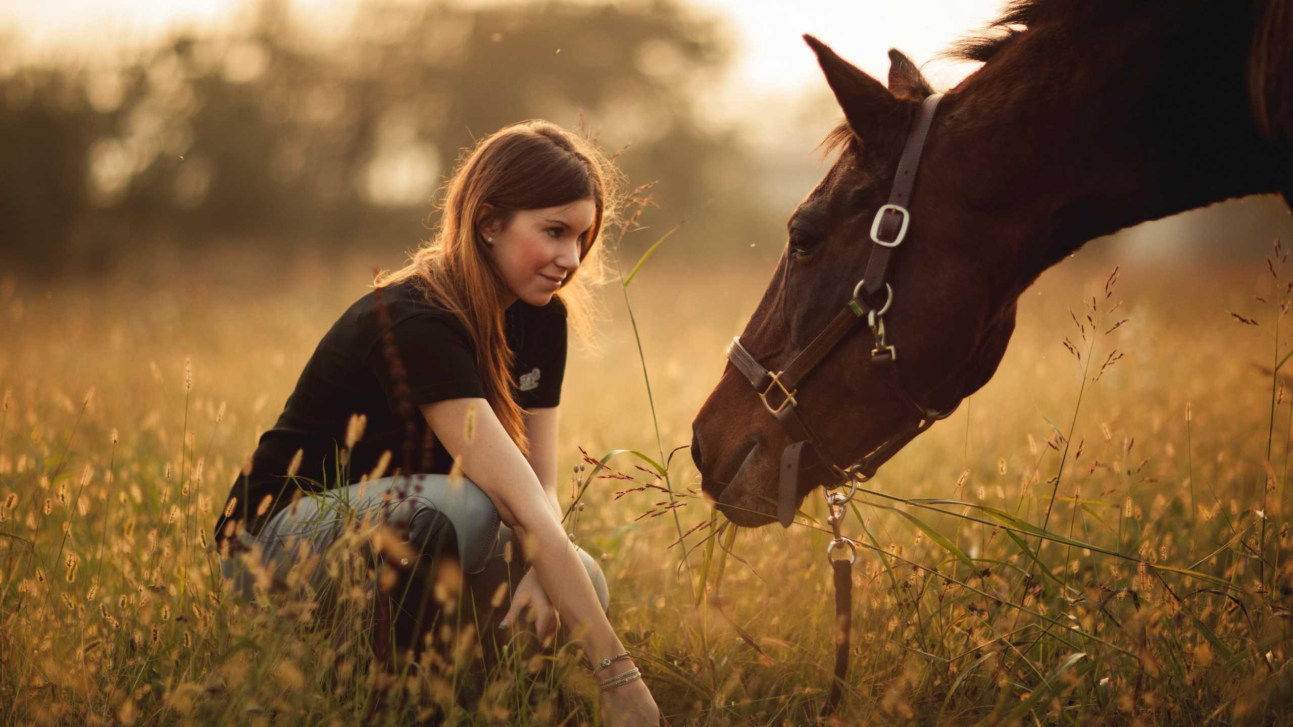 Домашние лошади вышли из степей между Волгой и Доном