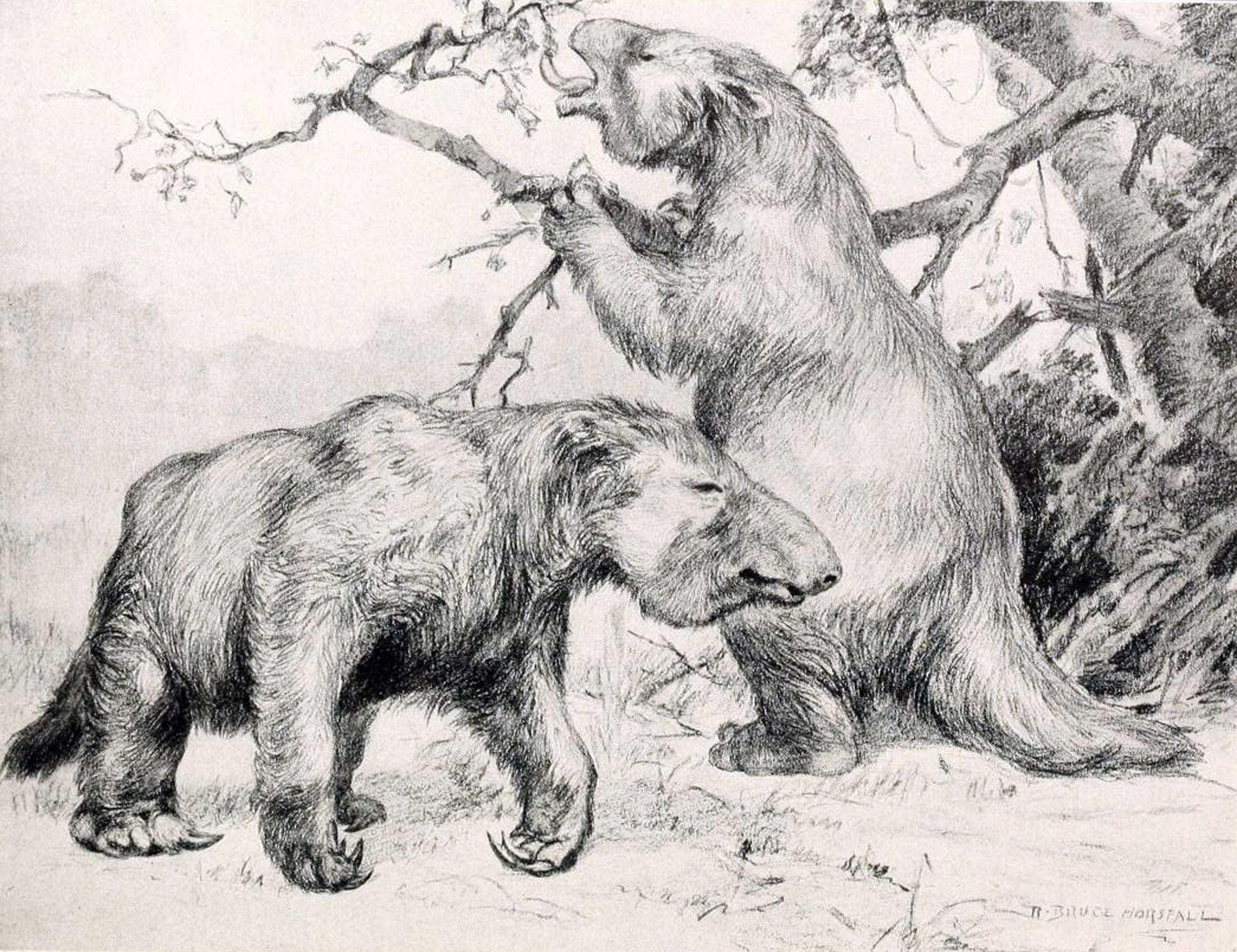 Вымерший гигантский ленивец оказался не прочь полакомиться мясом