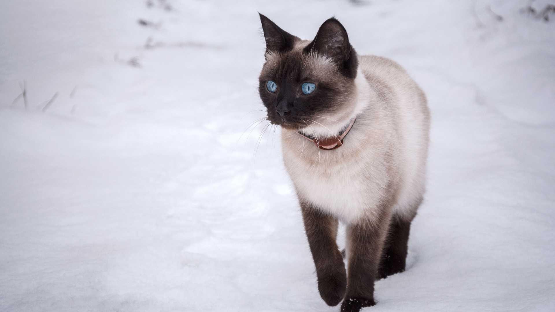 Раскрашиваем котика. Откуда берутся цвета и узоры на кошачьей шкуре